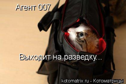 Котоматрица: Агент 007  Выходит на разведку...