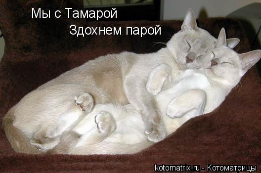 Котоматрица: Мы с Тамарой Здохнем парой