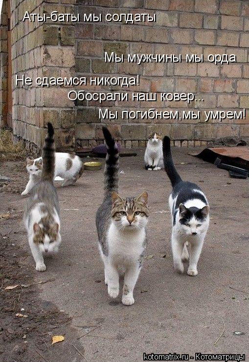 Котоматрица: Мы мужчины мы орда Не сдаемся никогда! Обосрали наш ковер... Аты-баты мы солдаты Мы погибнем,мы умрем!