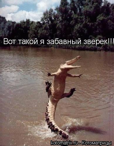 Котоматрица: Вот такой я забавный зверек!!!
