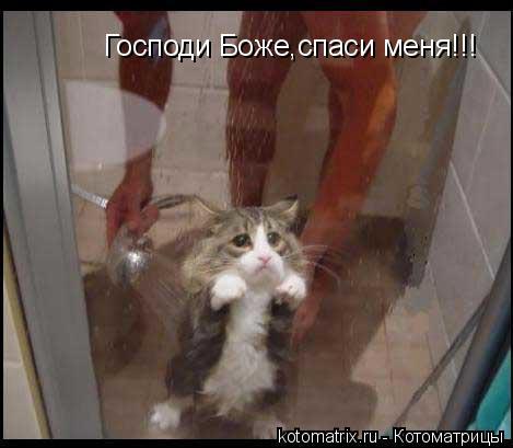 Котоматрица: Господи Боже,спаси меня!!!
