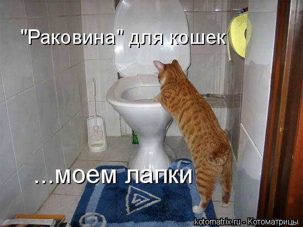 """Котоматрица: """"Раковина"""" для кошек ...моем лапки"""