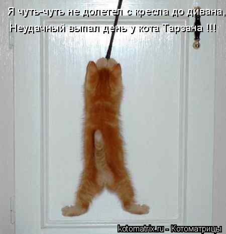 Котоматрица: Я чуть-чуть не долетел с кресла до дивана, Неудачный выпал день у кота Тарзана !!!