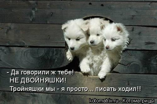 Котоматрица: - Да говорили ж тебе! НЕ ДВОЙНЯШКИ! Тройняшки мы - я просто... писать ходил!!