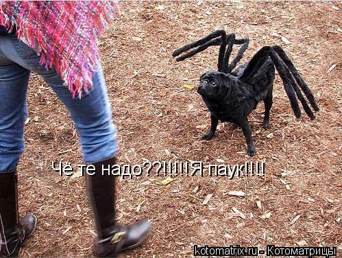 Котоматрица: Чё те надо??!!!!!Я паук!!!!