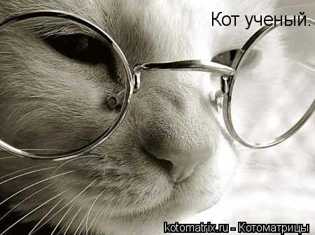 Котоматрица: Кот ученый.