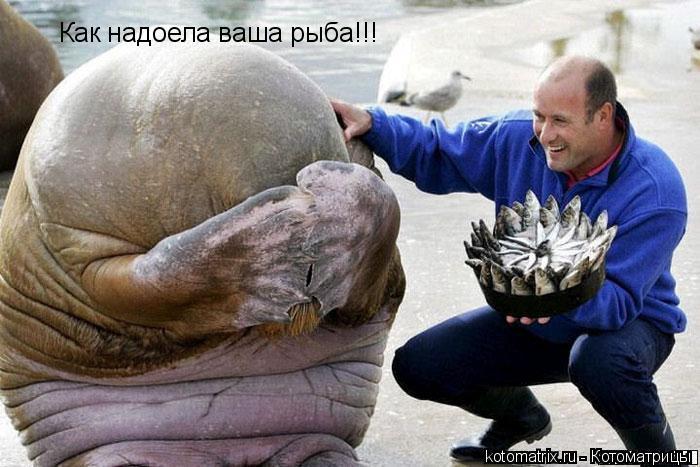 Котоматрица: Как надоела ваша рыба!!!