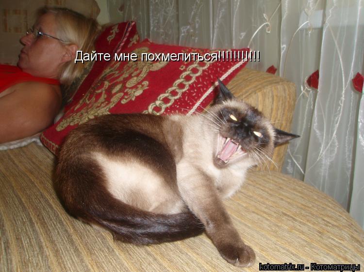 Котоматрица: Дайте мне похмелиться!!!!!!!!!!!