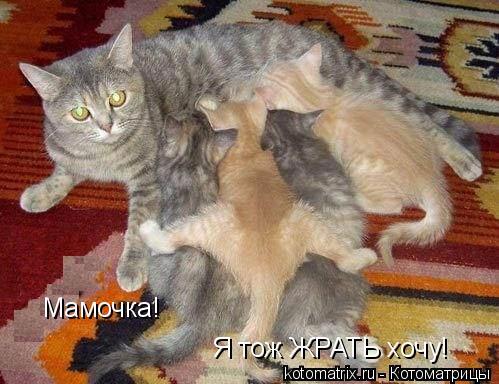 Котоматрица: Мамочка! Я тож ЖРАТЬ хочу!