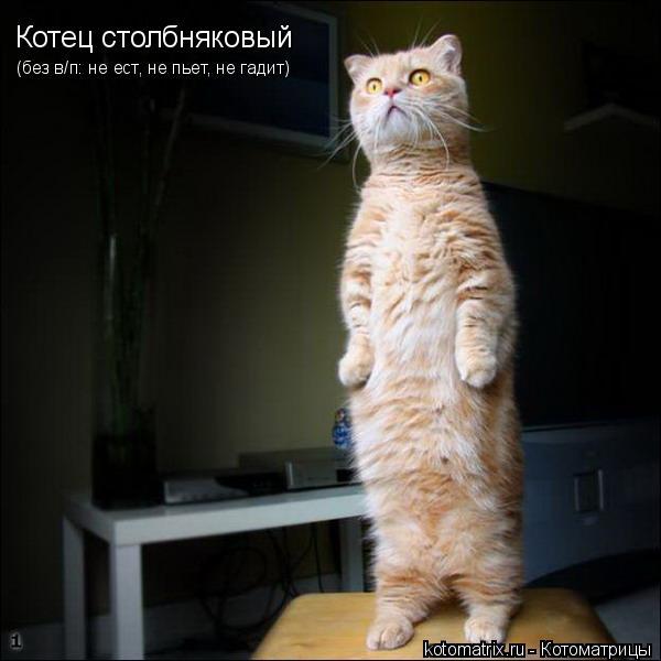 Котоматрица: Котец столбняковый (без в/п: не ест, не пьет, не гадит)