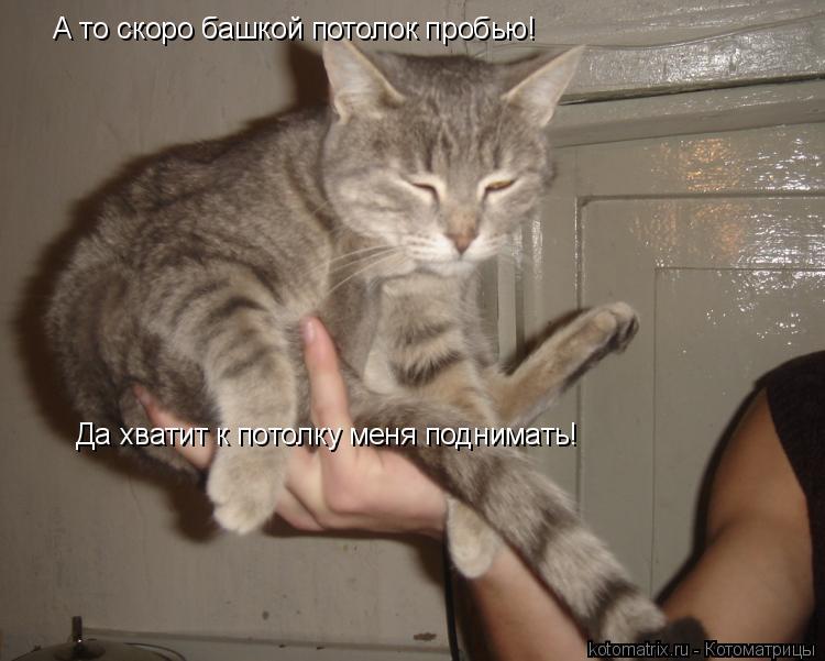 Котоматрица: Да хватит к потолку меня поднимать! А то скоро башкой потолок пробью!