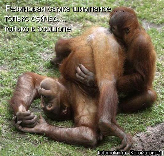 Котоматрица: Резиновая самка шимпанзе...... только сейчас.... только в зоошопе!