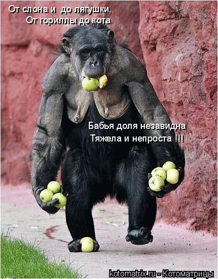 Котоматрица: От слона и  до лягушки, От гориллы до кота Бабья доля незавидна Тяжела и непроста !!!