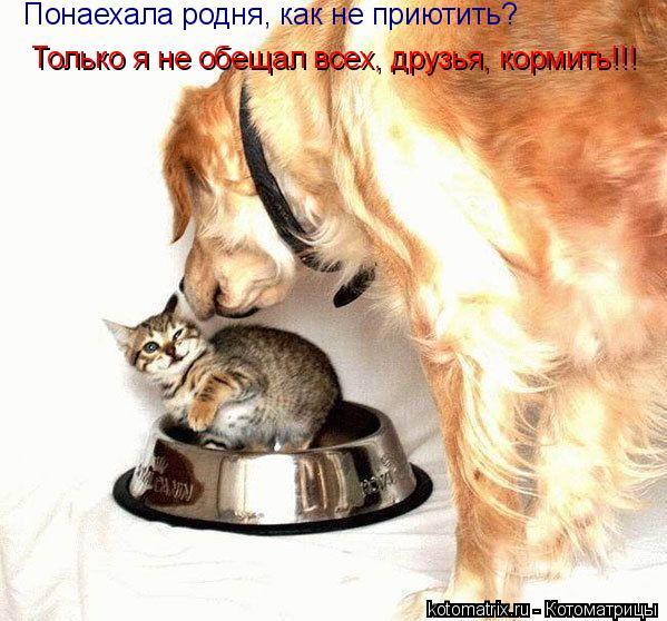 Котоматрица: Понаехала родня, как не приютить? Только я не обещал всех, друзья, кормить!!!