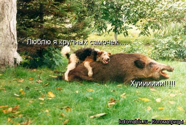 Котоматрица: Люблю я крупных самочек..... Хуииииии!!!!!