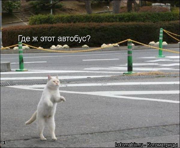 Котоматрица: Где ж этот автобус?