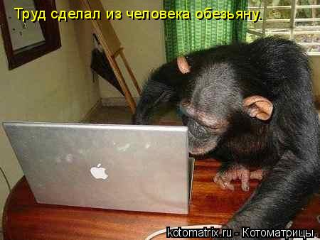 Котоматрица: Труд сделал из человека обезьяну.