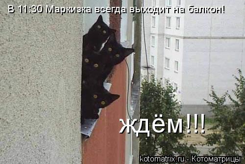 Котоматрица: В 11:30 Маркизка всегда выходит на балкон! ждём!!!