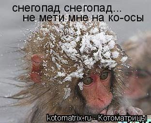 Котоматрица: снегопад снегопад... не мети мне на ко-осы