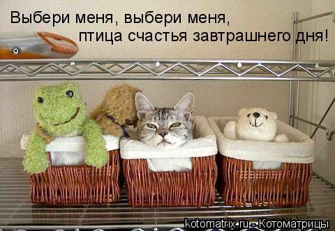 Котоматрица: Выбери меня, выбери меня,  птица счастья завтрашнего дня!