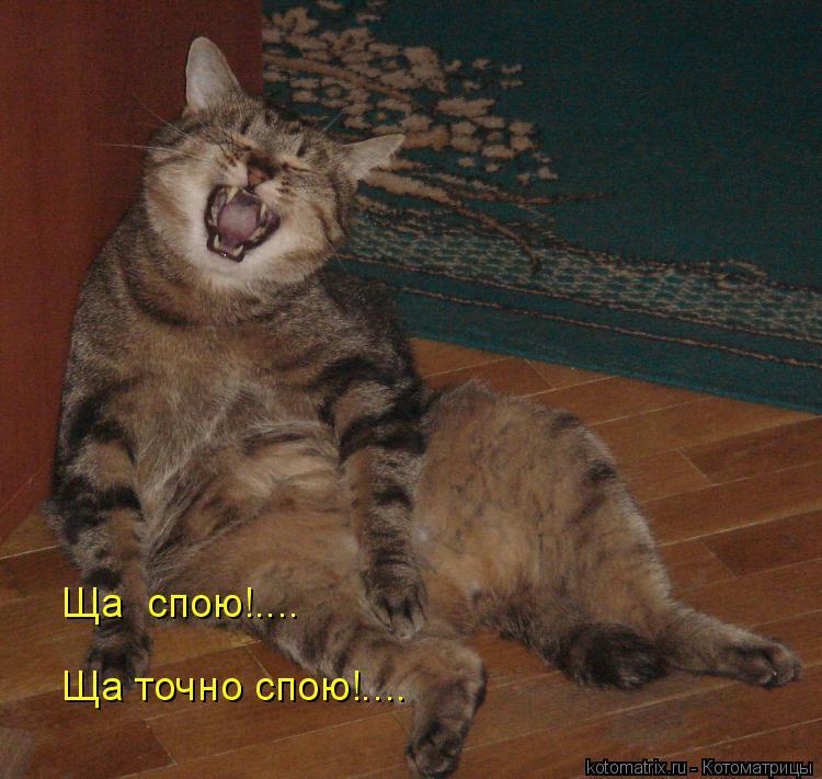 Котоматрица: Ща точно спою!.... Ща  спою!....