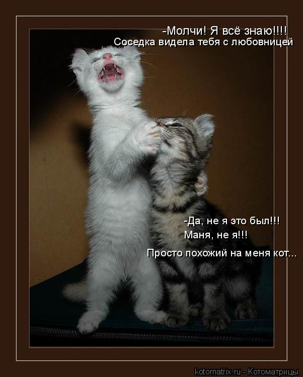 Котоматрица: -Молчи! Я всё знаю!!!! -Да, не я это был!!! Маня, не я!!! Просто похожий на меня кот... Соседка видела тебя с любовницей