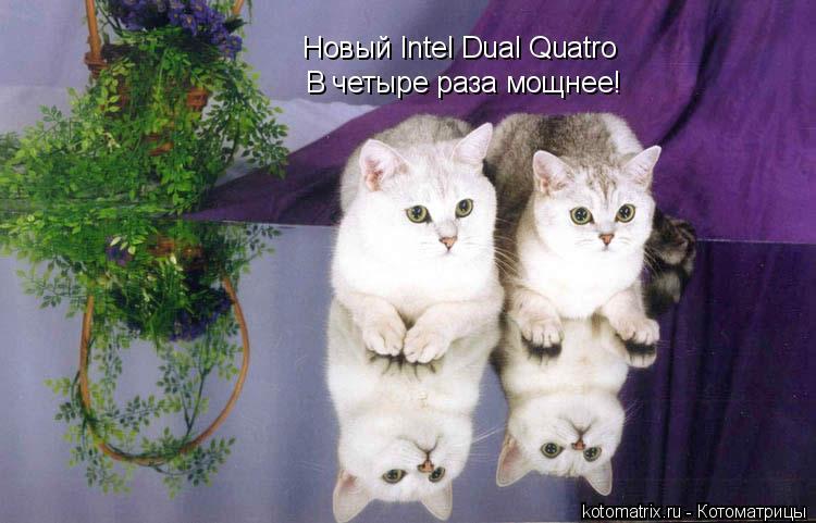 Котоматрица: Новый Intel Dual Quatro В четыре раза мощнее!