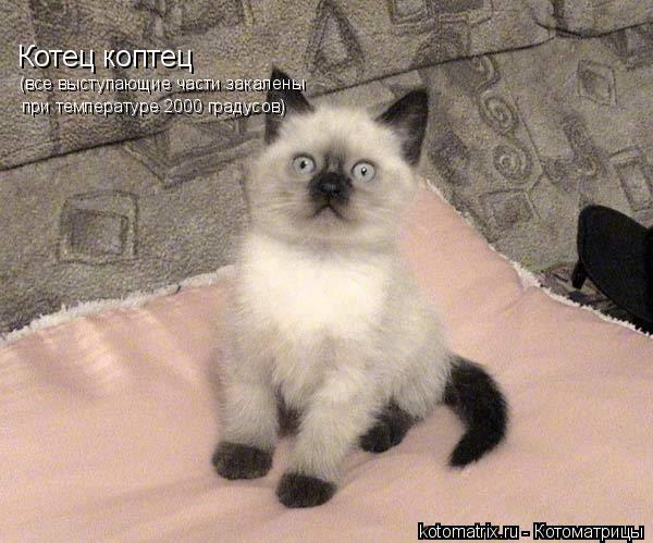 Котоматрица: Котец коптец (все выступающие части закалены  при температуре 2000 градусов)