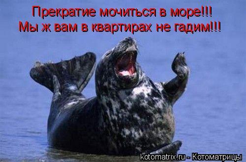 Котоматрица: Прекратие мочиться в море!!! Мы ж вам в квартирах не гадим!!!