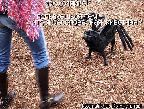Котоматрица: пользуешься тем  что я бессловесная животная? ээх хозяйко!