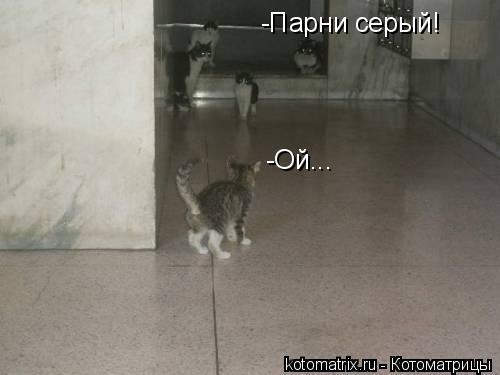 Котоматрица: -Парни серый! -Ой...
