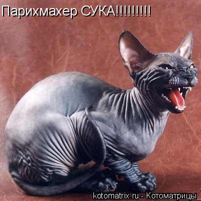 Котоматрица: Парихмахер СУКА!!!!!!!!!
