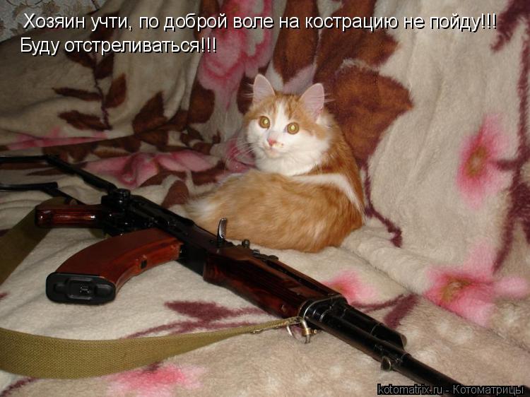 Котоматрица: Хозяин учти, по доброй воле на кострацию не пойду!!! Буду отстреливаться!!!