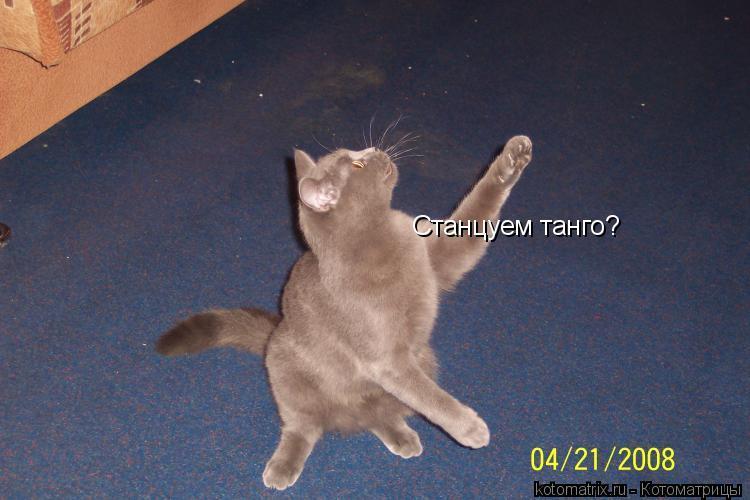 Котоматрица: Станцуем танго?