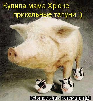 Котоматрица: Купила мама Хрюне прикольные тапуни :)