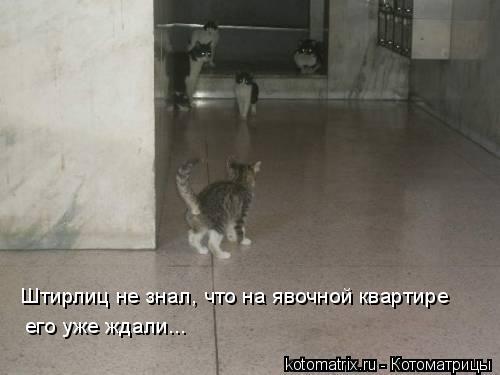 Котоматрица: Штирлиц не знал, что на явочной квартире его уже ждали...