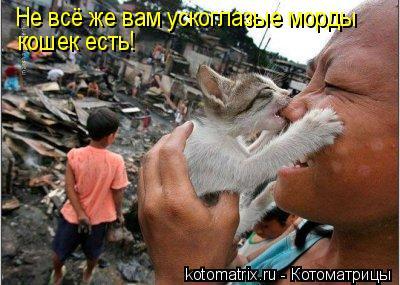 Котоматрица: Не всё же вам ускоглазые морды кошек есть!