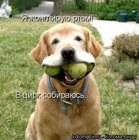 Котоматрица: Я жонглирую ртом! В цирк собираюсь...