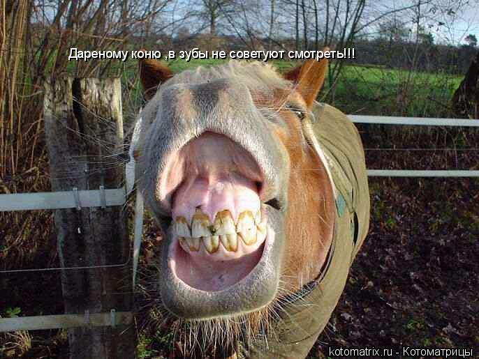 Котоматрица: Дареному коню ,в зубы не советуют смотреть!!!