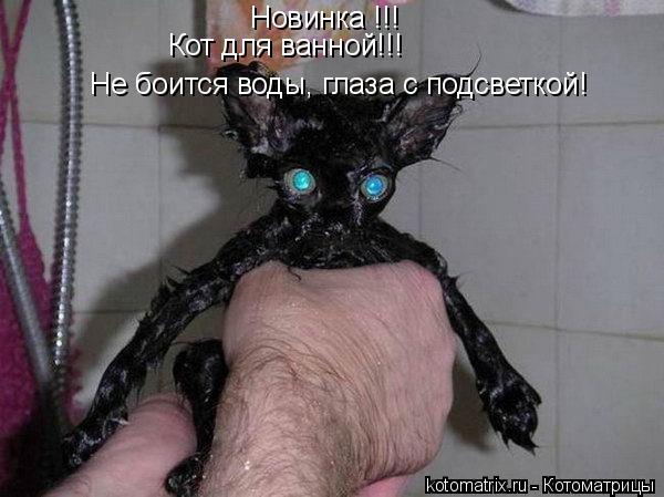 Котоматрица: Новинка !!! Кот для ванной!!! Не боится воды, глаза с подсветкой!
