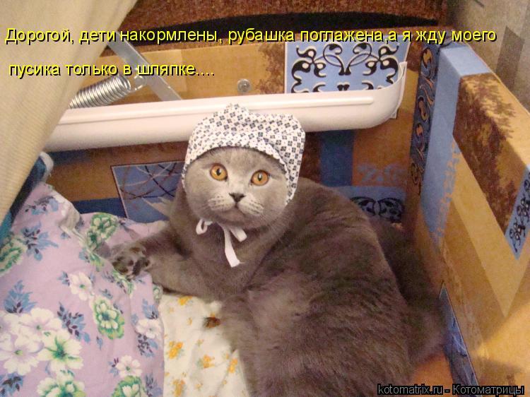 Котоматрица: Дорогой, дети накормлены, рубашка поглажена,а я жду моего  пусика только в шляпке....
