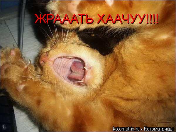 Котоматрица: ЖРАААТЬ ХААЧУУ!!!!