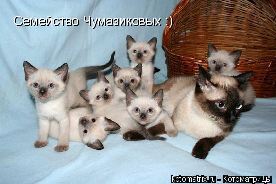 Котоматрица: Семейство Чумазиковых :)