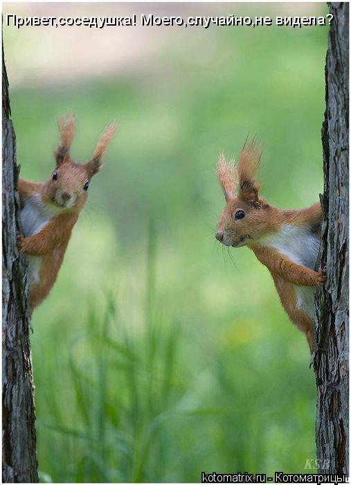 Котоматрица: Привет,соседушка! Моего,случайно,не видела?