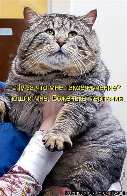 Котоматрица: Ну за что мне такое мучение? пошли мне, Боженька, терпения...
