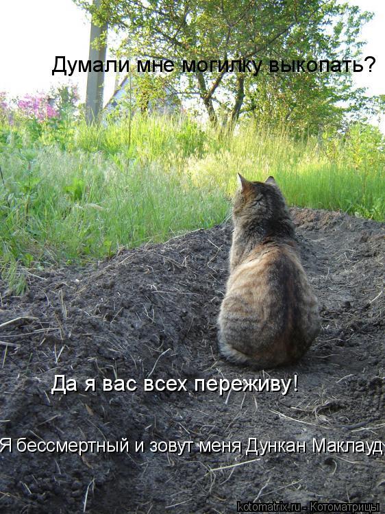 Котоматрица: Думали мне могилку выкопать? Да я вас всех переживу! Я бессмертный и зовут меня Дункан Маклауд!