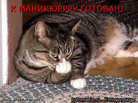 Котоматрица: К МАНИКЮРРРУ ГОТОВА!!!