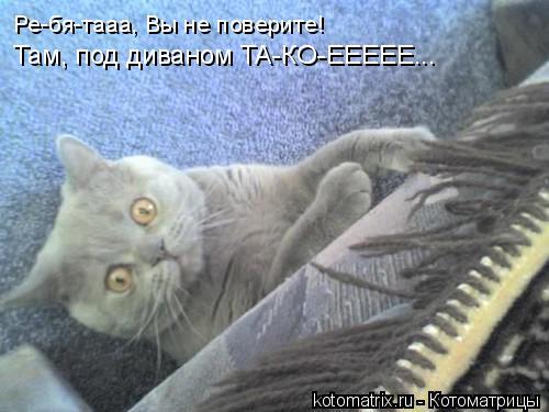 Котоматрица: Ре-бя-тааа, Вы не поверите! Там, под диваном ТА-КО-ЕЕЕЕЕ...