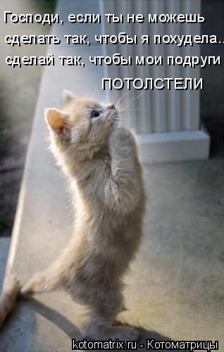 Котоматрица: Господи, если ты не можешь сделать так, чтобы я похудела... сделай так, чтобы мои подруги ПОТОЛСТЕЛИ