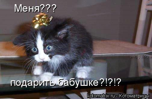 Котоматрица: Меня??? подарить бабушке?!?!?